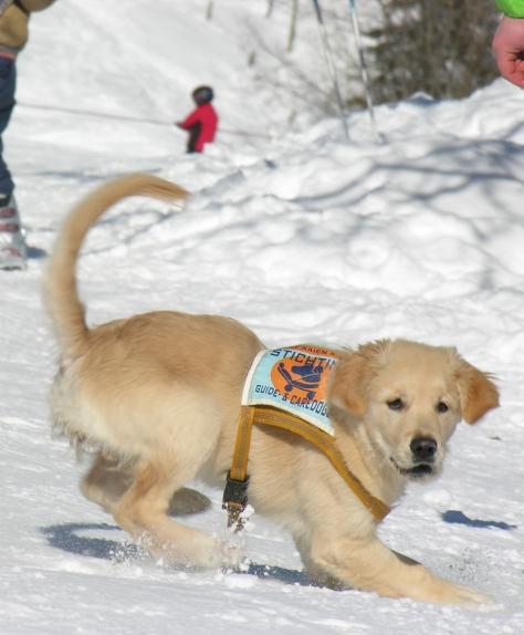 honden-2306